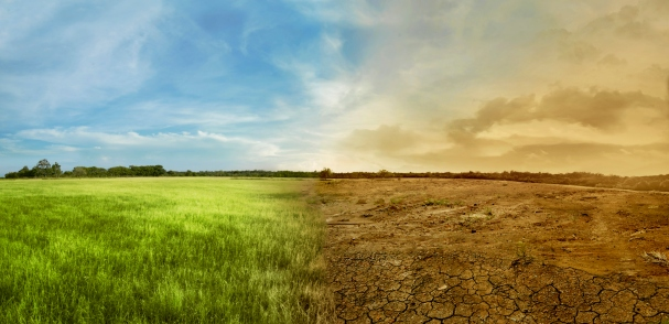 Landscape of meadow field with the changing environment
