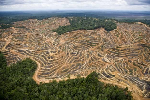 deforestacionpalma
